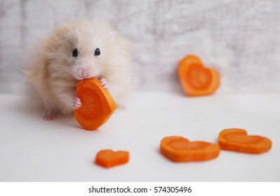 Fluffy the hamster with a carrot.