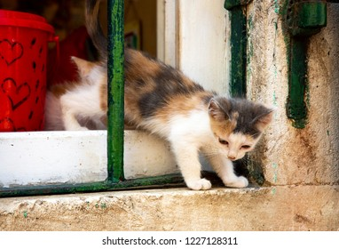Fluffy Kitten Climbing out a Window - Kotor, Montenegro