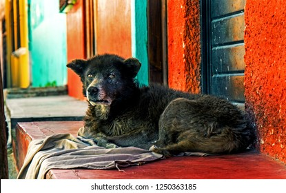 Fluffy old dog lying in front of colorful houses in Mexico