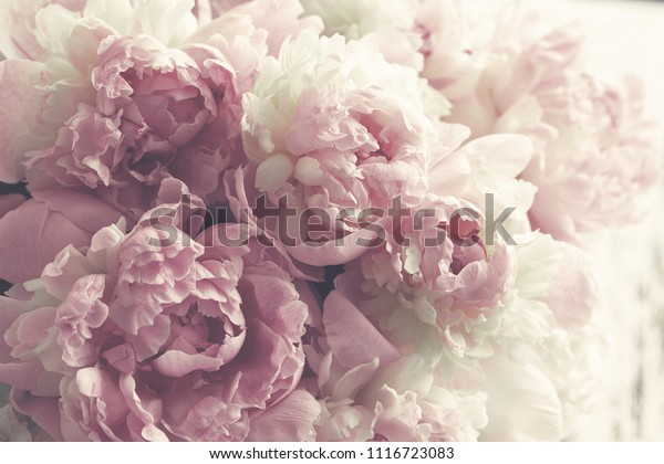 Fluffy pink peonies flowers background