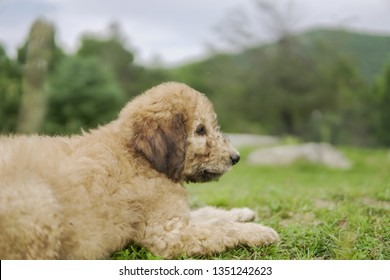 Fluffy Puppy in Grassy Pasture
