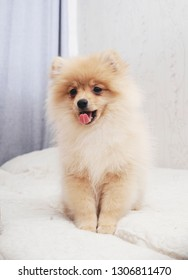 Fluffy puppy on the bed