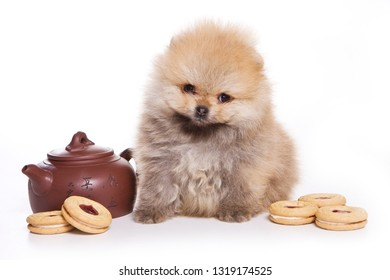 Fluffy puppy of pomeranian dog and donut (isolated on white)