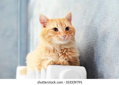 Fluffy red cat on warm radiator near grey wall