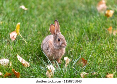Fluffy small bunny