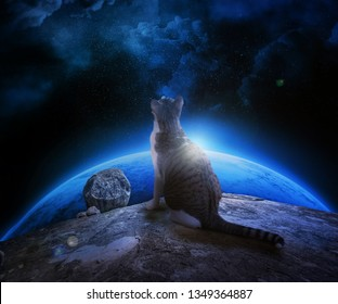 Fluffy spotted cat looks at the space sitting on a rock. Space, stars, planet, emptiness, rocks and a spotted cat. Space Cat Alien. Thinking about the space and infinity