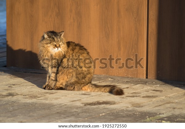 fluffy-street-tabby-cat-basks-600w-19252