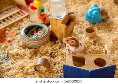 Fluffy Syrian Hamster with wooden hamster house in a cage.