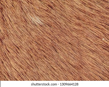 Fluffy wet brown horse winter fur. Animal hair of fur ponny leather. Natural Fluffy brown cowhide body
