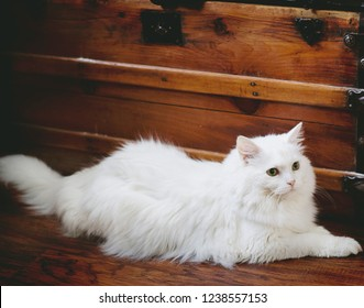 A fluffy white cat laying on a wood floor against an antique wood trunk.