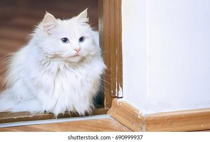 Fluffy white cat sitting on a floor