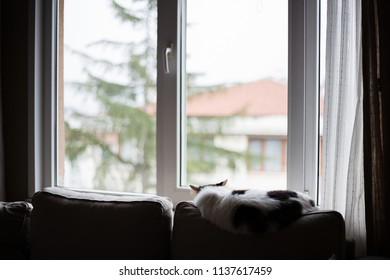 Fluffy white and gray cat is looking to outside from a window (selective focus)