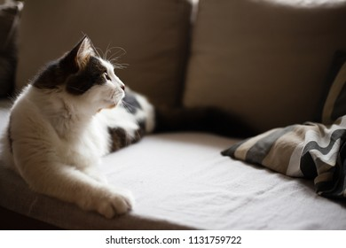 Fluffy white and gray cat is lying down on a sofa, side view (selective focus)