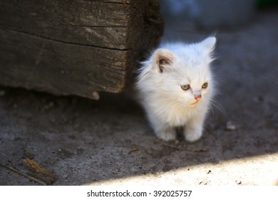 fluffy white kitten sitting on the street in the shade