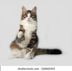 Fluffy white and tabby cat sitting on gray background