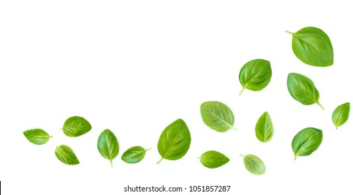 Fluing Fresh  basil herb leaves isolated on white background. Top view. Flat lay.