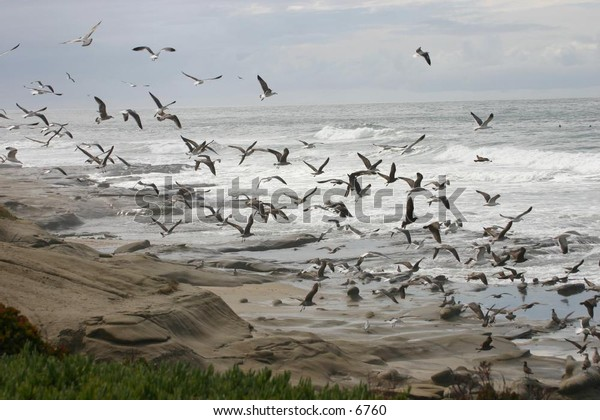 flurry of seagulls at the beach