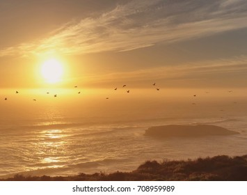 Fly Away – Birds flying in front of an amazing sunset