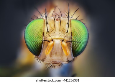 fly eye nature micro portrait sharp detail