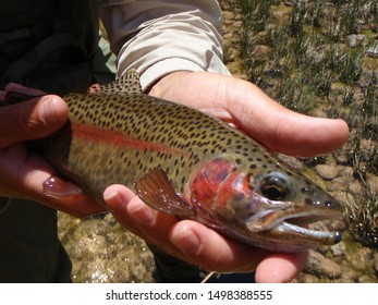 fly fishing Arizona's Colorado river at Lee's Ferry