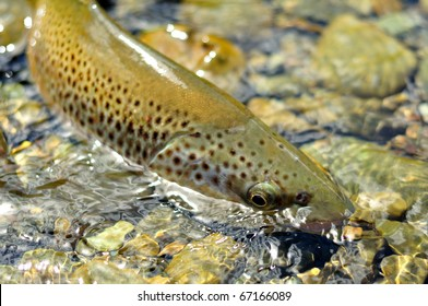 Fly Fishing - Brown tour