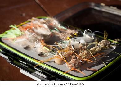 fly fishing flies for bonefish, barracuda, tarpon, triggerfish in a tacklebox