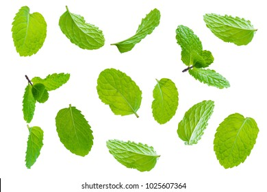Fly fresh raw mint leaves isolated on white background