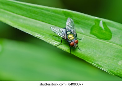 fly in green nature or in the city
