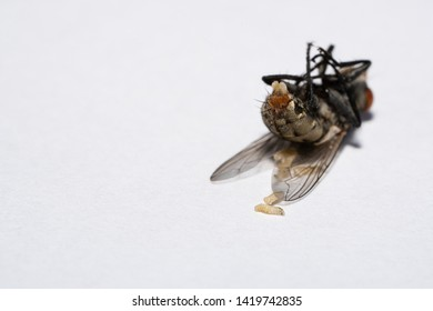 Fly Eggs Images, Stock Photos & Vectors   Shutterstock
