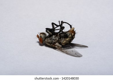 Small Insect Egg Images, Stock Photos & Vectors   Shutterstock