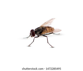 fly an isolated on a white background