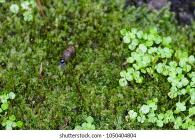 A fly, lichen and moss, and weed.