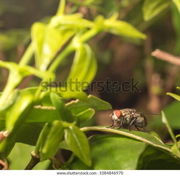 The fly in the napa name, tropical wood, bi.