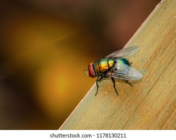 Fly on blade of grass artistic effect colorful nature macro photography