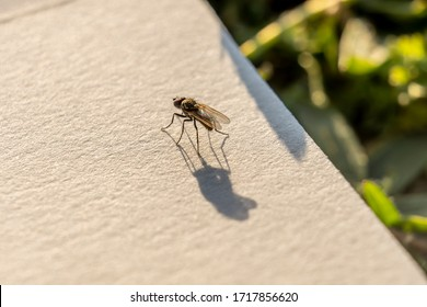 Fly on a canvas in evening sunlight with long shadow