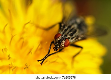 Fly on the dandelion