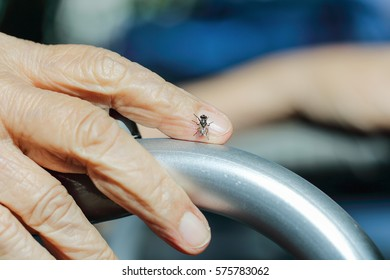 Fly on elderly woman hand