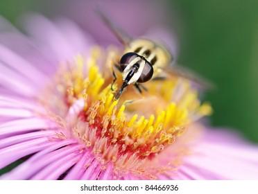 Fly on flower.
