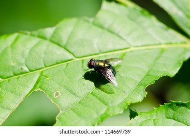 fly on green leaf. In tropical forests.