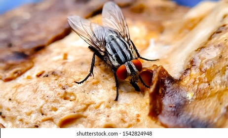 fly on roasted chicken - unhygienic food
