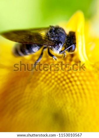 fly-on-yellow-flower-macro-450w-11530105