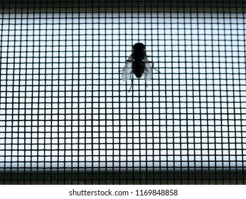 Fly Perched on The Mosquito Screen