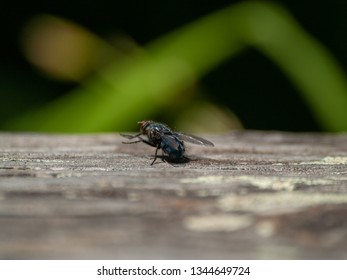 A fly perched on an old wooden board