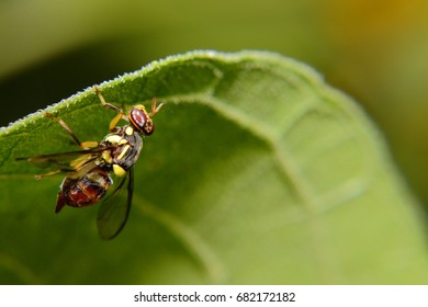 Fly rest under the green leaf of herb in tropical forest, Thailand