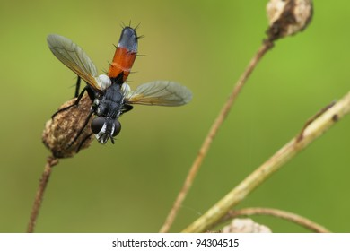 Fly sits on a branch.