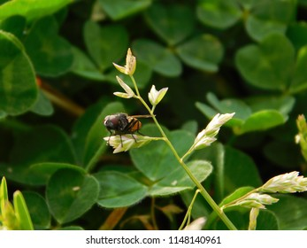 Fly Sits on a Plant