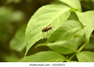 a fly sitting on a sheet of