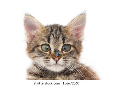 The fly which sits on a nose at a kitten