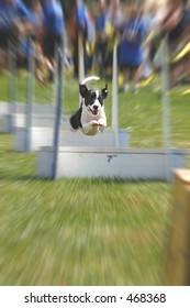 flyball dog with motion blur