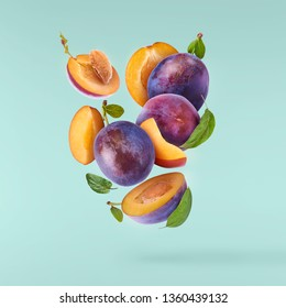 Flying in air fresh ripe whole and cut Plums with leavs isolated on pastel turquoise background. High resolution image